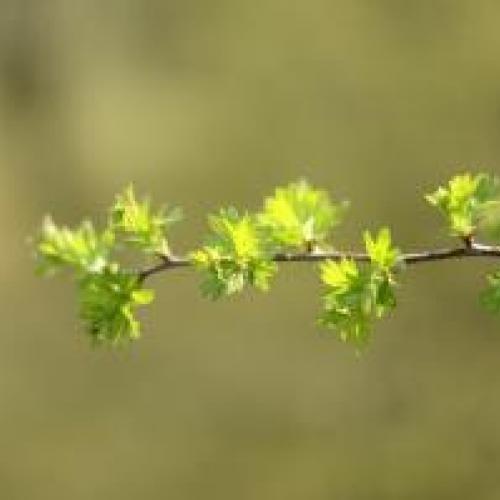 Dag van de Grune Plastron - 50 tinten natuur! © Nyske