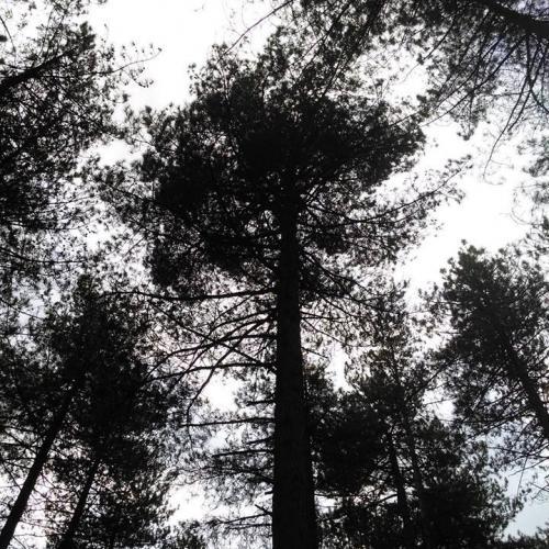 Lezing: Weetjes en verhalen over bomen en struiken (Rijkevorsel) © Natuurpunt